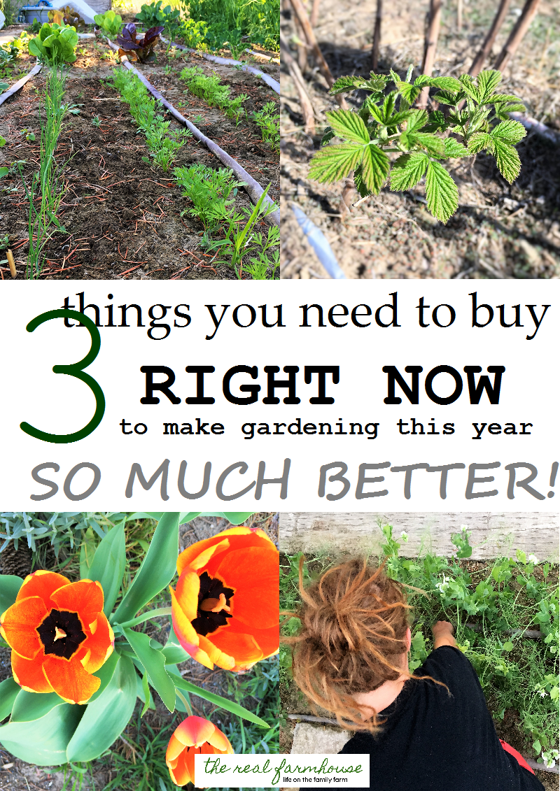 3 things you need to buy RIGHT NOW to make gardening this year SO MUCH BETTER!