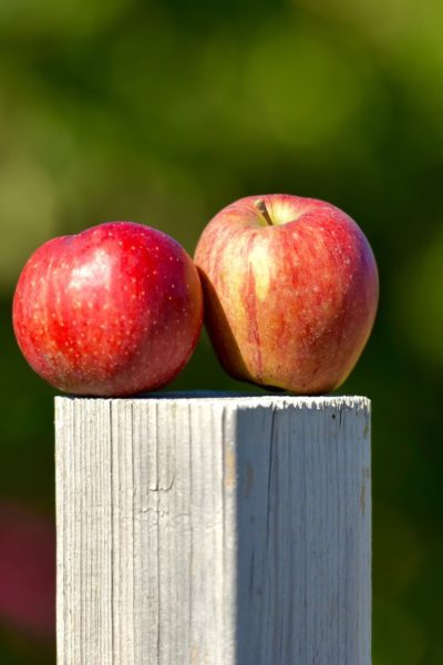 How to save thousands on your dream orchard