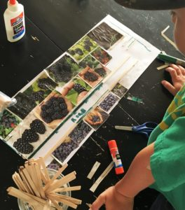 Super cool dream garden planning activity for all ages