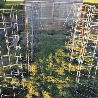 DIY Beefy tomato cage for only $6