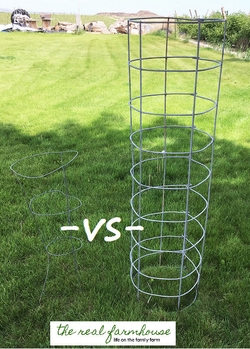 DIY BEEFY tomato cage for only $6 video tutorial, and it will last FOREVER