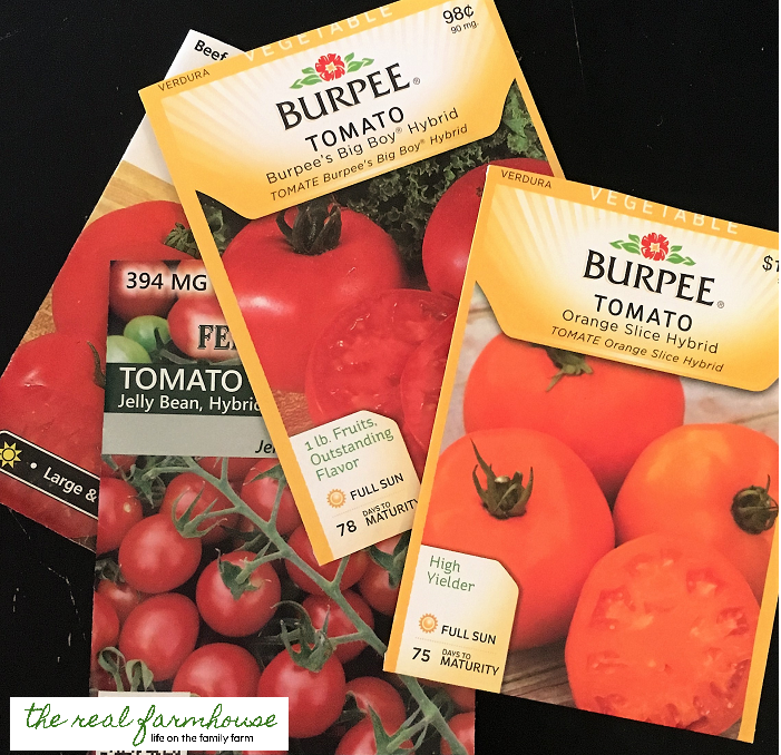 How to guarantee you'll have the first ripe tomatoes on the block!