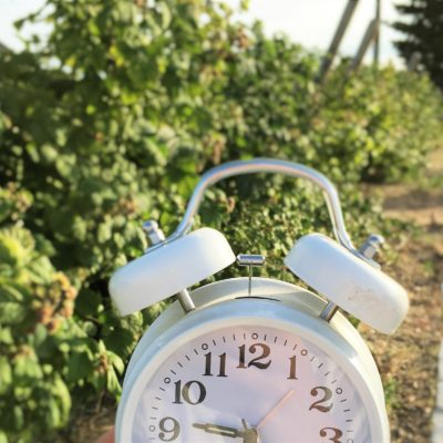 How much time does it REALLY take to maintain a 3000 square foot garden