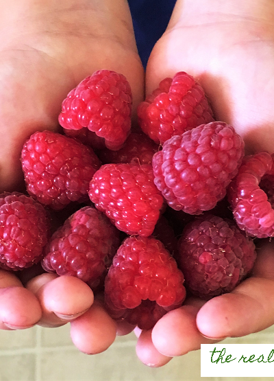 The 3 biggest factors in how big and juicy your raspberry fruit gets