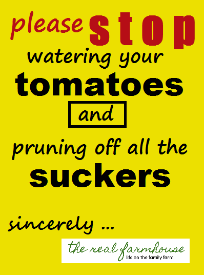 your doing it all wrong! stop hurting your tomato harvest by changing these 2 things
