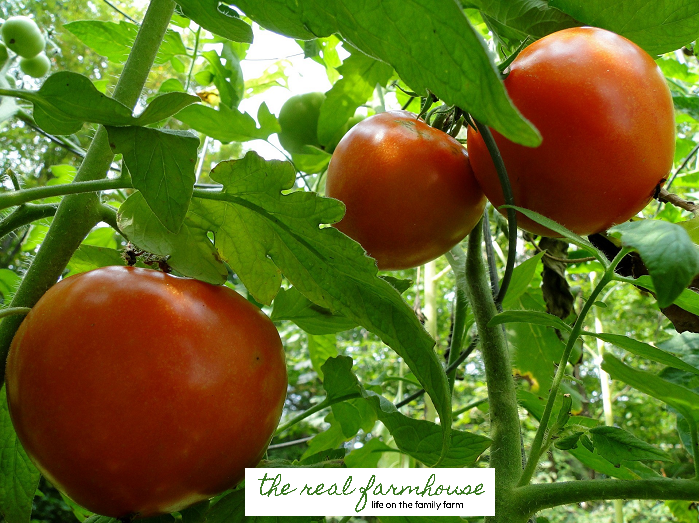 6 things I wish I knew before I started a garden.