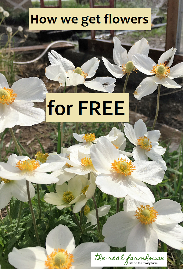 before you go spend money buying flowers at the store, read this! You can get all the plants you need to landscape your yard for FREE.