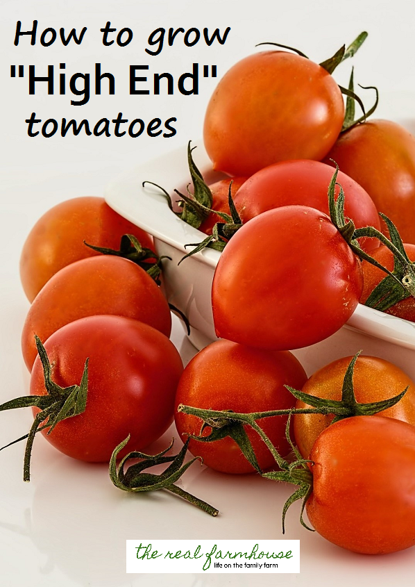 "for your tomatoes to be classified as ""high end"" there are a few things you need to do"