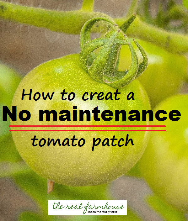 A little work up front, makes for a SUPER easy tomato growing season