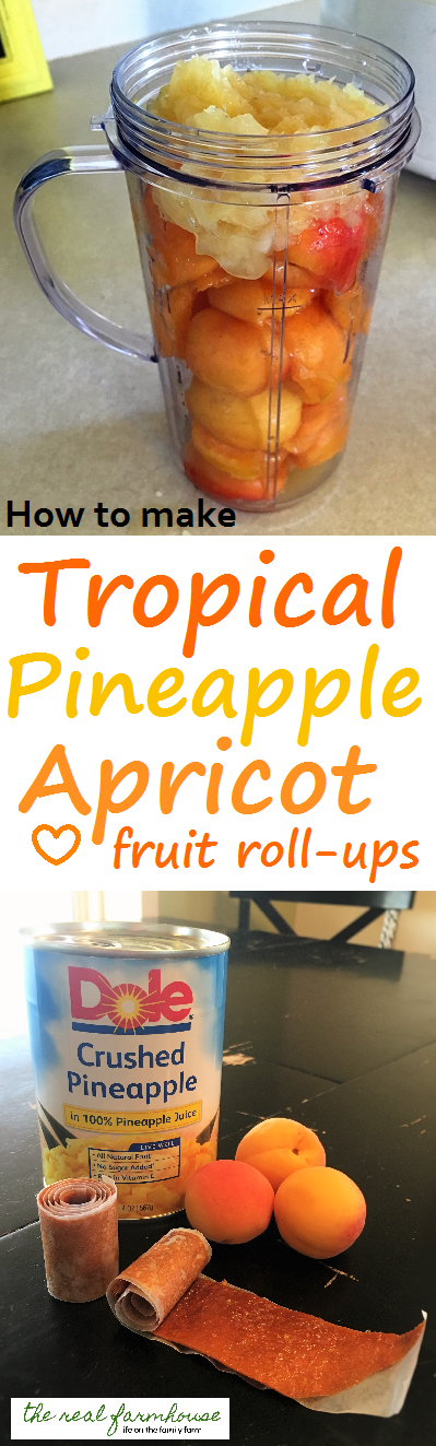 Tropical Pineapple Apricot fruit roll ups with a food dehydrator. Delicious, easy, and fun.