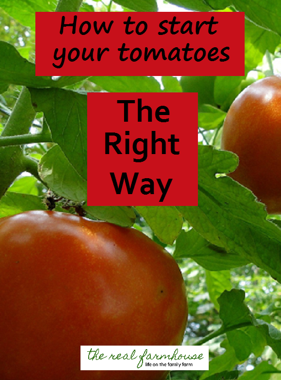 Some tips and tricks to staring your tomatoes the right way. Less watering, less weeding, and less worrying