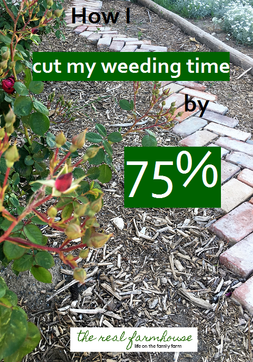 mulching this way makes it so I only have to weed my garden twice a year!