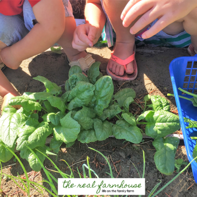 43 perfect homesteading chores for the 5 and under crew