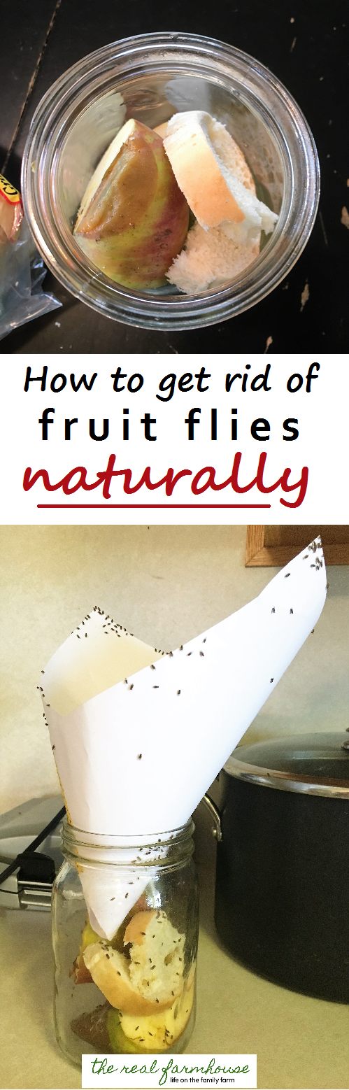 fruit best way to get rid of fruit flies