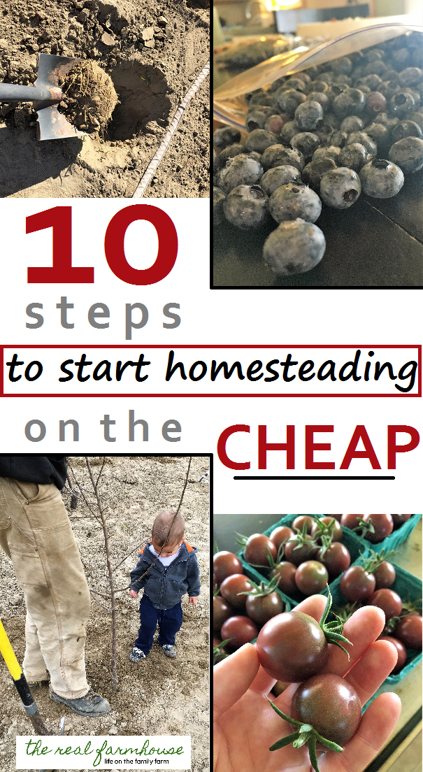 10 steps to start homesteading on the cheap
