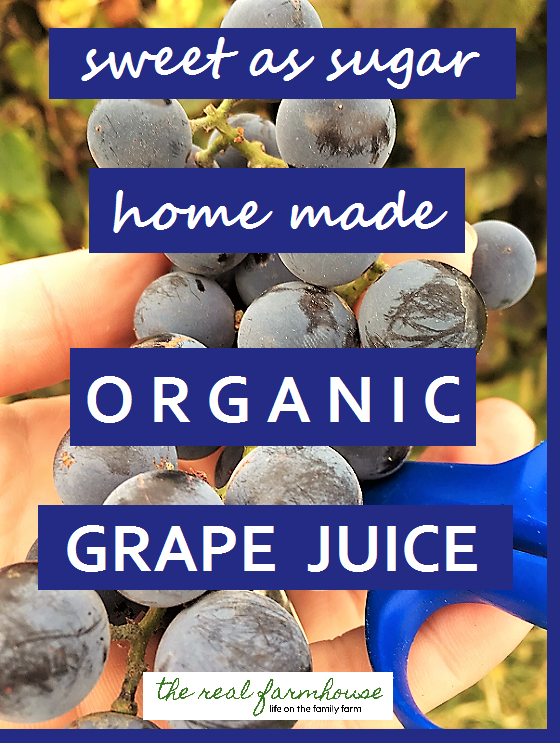 how to make homemade organic grape juice.