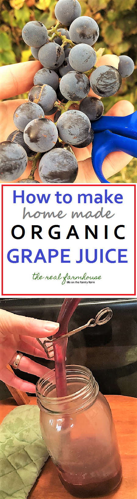 How to make home made organic grape juice.