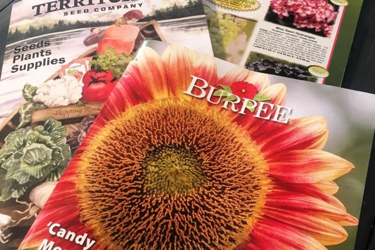 How to get free seed catalogs