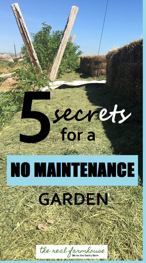 Great Advice For Planning A No Maintenance Garden! 5 Secrets And How To  Implement Them